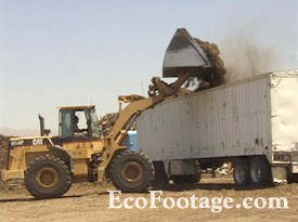 Front loader dumping recycled mulch into transfer trailer.